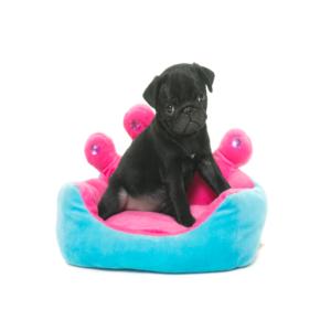 Black-pug-in-princess-bed