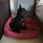 Bertie-in-Chilli-Dog-Pet-Bed
