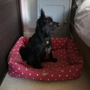 Bertie-in-Chilli-Dog-Pet-Bed