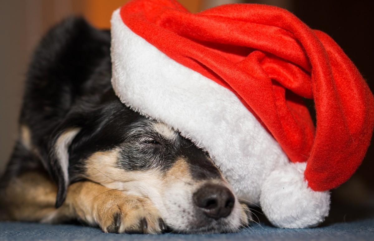 Father Christmas dog