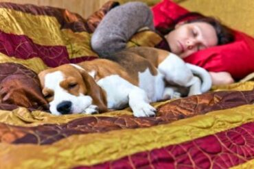 Difference between sleep patterns of dogs and humans
