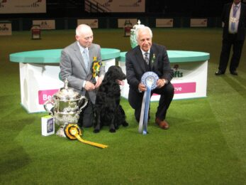 Crufts Dog Show - Crufts Dog Beds