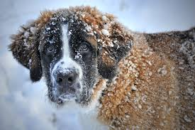 Cold dog in the winter