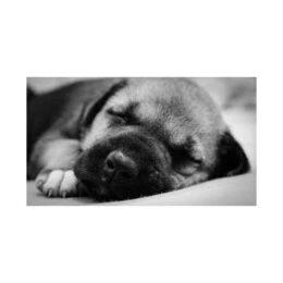 Sleeping-Dog World Sleep Day