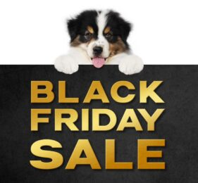 Black Friday 2020 dog bed