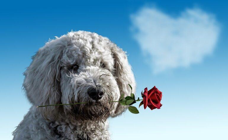Happy Valentines Day dog